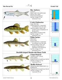 Small image of a page from the fish guide